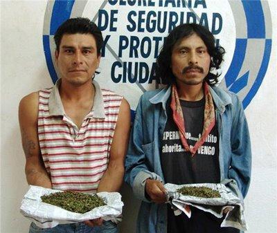 mariguanos
