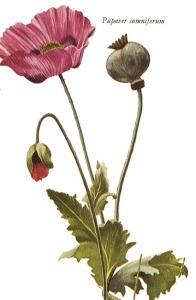 opio2