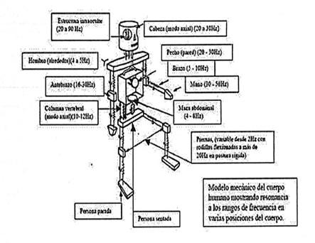 efectos-microondas-cuerpo-humano