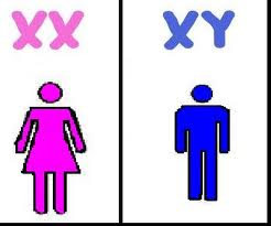 xx-and-xy-chromosomes